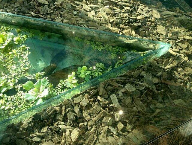 حضور قانونی تمساح در مرکز خرید تهران
