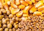 قیمت روز نهاده های دامی و محصولات کشاورزی (۱۳ مهر)