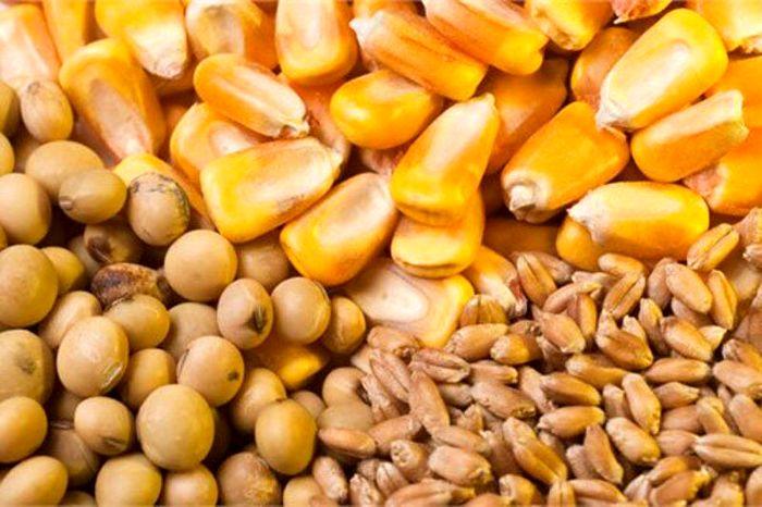 فائو: کرونا ۵۰ کشور جهان را به شدت گرسنه کرد
