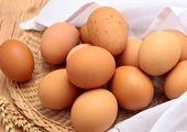 قیمت روز تخم مرغ در بازار (۹۹/۰۸/۲۷) + جدول