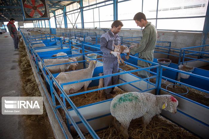 مخالفت دامداران با افزایش قیمت شیرخام + جزئیات