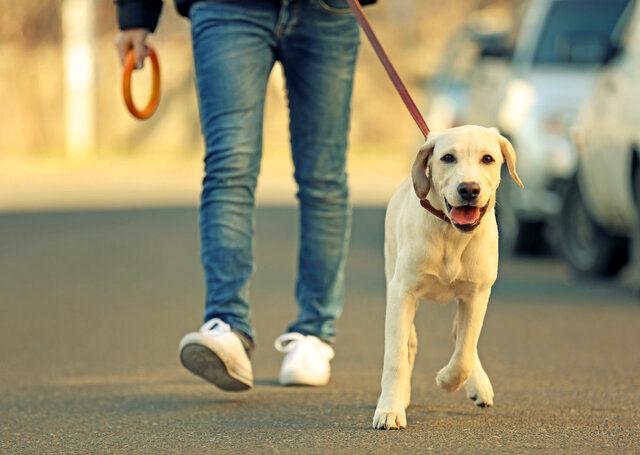 مصوبه جدید درباره سگ گردانی در شهر