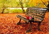 ۶ خوراکی پاییزی موثر برای پاکسازی بدن