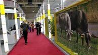 برگزاری بزرگترین نمایشگاه دام طیور خاورمیانه در سایت تهران