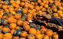 قحطی خاموش؛ از خرید میوه های پلاسیده تا پوست مرغ