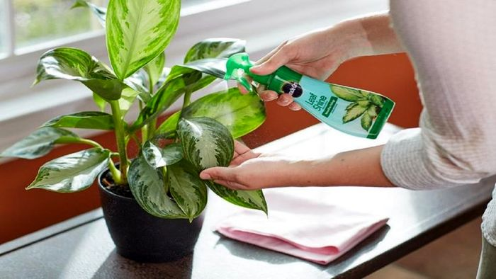 این گیاهان ویروس ها را تار و مار می کنند
