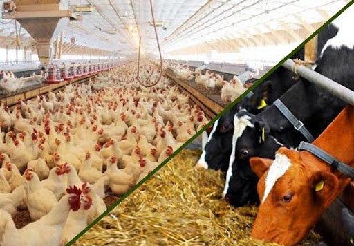 قیمت روز نهاده های دامی و کشاورزی در بازار (۱۴۰۰/۰۱/۲۹) + جدول