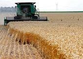 خبر خوش خرید تضمینی برای کشاورزان