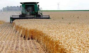 دولت چقدر گندم خریده؟