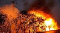 آتش بازهم به جان جنگلهای کهگیلویه و بویراحمد افتاد