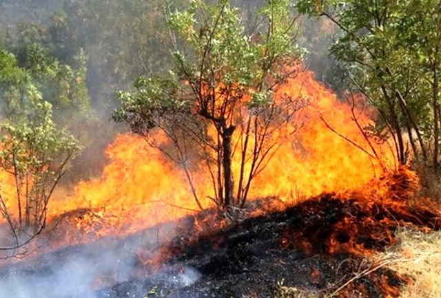 جنگل های سیاهکل در چنگال آتش