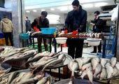 قیمت روز ماهی در بازار (۹۹/۱۱/۲۶) + جدول