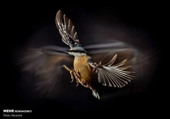 عکاسی-پرنده (17)