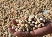 رشد چشمگیر صادرات خشکبار کشور + جزییات