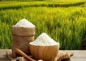 فرصتی ۶ ماهه برای حمایت از برنج کاران