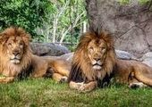 فاجعه حیوانی اینبار در باغ وحش تبریز
