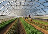 این وزیر پیشنهادی برای تامین اجتماعی کشاورزان برنامه دارد