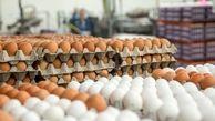 قیمت تخم مرغ در بازار (۹۹/۰۴/۱۹) + جدول