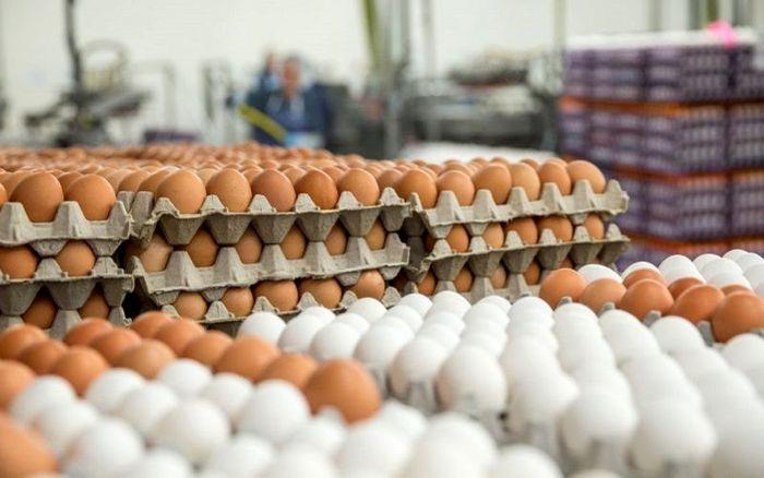 قیمت تخم مرغ در بازار امروز (۹۹/۰۴/۱۰) + جدول