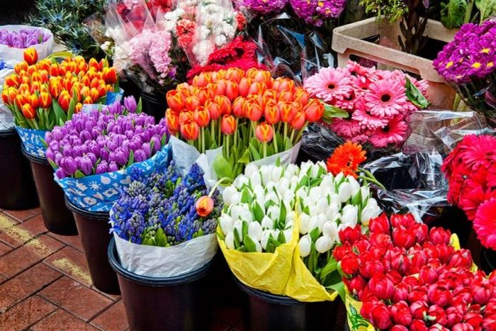 خرید گل چقدر آب می خورد؟
