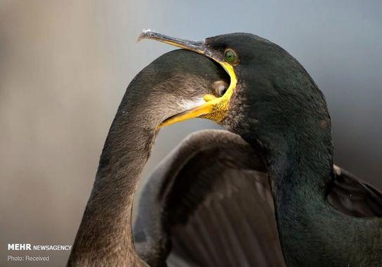 عکاسی-پرنده (7)