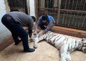 مهران مدیری به حیوان آزاری متهم شد
