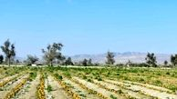 کشاورزی قراردادی فرمولی برای رشد کیفیت