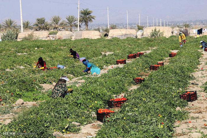 حمایت از سرمایه داران برای توسعه اشتغال روستایی